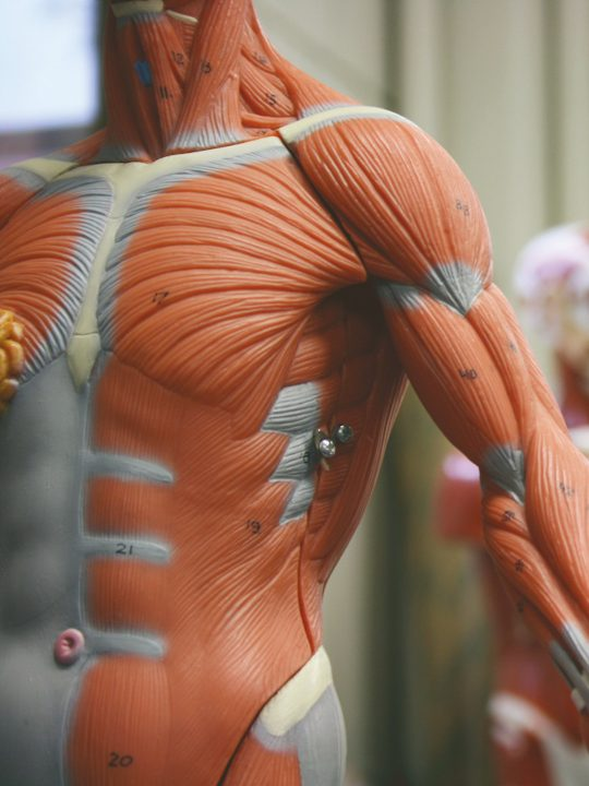 Advanced Anatomy & Physiology Level 3 course